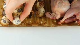 Świeży mięso przepiórka w plastikowej brąz tacy obok przepiórek jajek na białym tle Żeński ręka wp8lywy i stawiający zbiory wideo