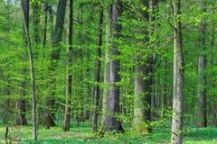 Świeży mieszany lasowy stojak w wiosny słońcu Obraz Stock