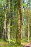 Świeży mieszany lasowy stojak w wiosny słońcu Obrazy Royalty Free
