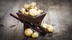 Świeży Muschrooms w miniaturowym wheelbarrow Obrazy Stock