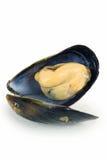 świeży mussel Obrazy Stock