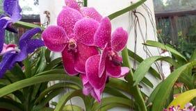 Świeży ogród kwitnie od ogródu Fotografia Royalty Free
