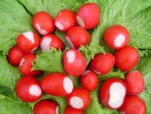 świeży ogrodowy rzodkwi sałatki prześcieradło Fotografia Stock