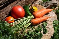 Świeży organicznie ogród kultywował warzywa na kamieniu Obraz Royalty Free