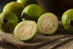 Świeży Organicznie Zielony Guava obrazy royalty free