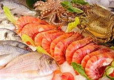 świeży owoce morza Obraz Stock