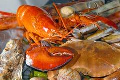 świeży owoce morza Zdjęcia Royalty Free