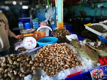 Świeży owoce morza tak jak ślimaczek kałamarnicy kraba krewetkowy Cockle w Tajlandia owoce morza rynku Zdjęcie Royalty Free