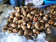 Świeży owoce morza tak jak ślimaczek kałamarnicy kraba krewetkowy Cockle w Tajlandia owoce morza rynku Obraz Royalty Free