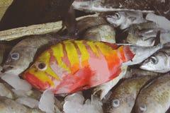 Świeży owoce morza w rybim rynku Zdjęcie Royalty Free
