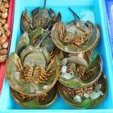 Świeży podkowa krab Zdjęcie Royalty Free