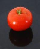 świeży pomidor Fotografia Stock