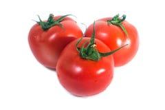 Świeży pomidor Zdjęcia Stock