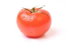świeży pomidor Fotografia Royalty Free