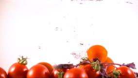 Świeży pomidor w wodzie zbiory