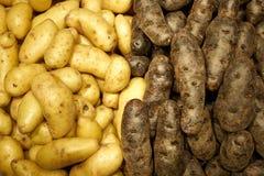 Świeży produkt spożywczy przy rolnika rynkiem Obraz Stock