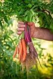 Świeży różnorodny warzywa trzyma w mężczyzna ręce obrazy royalty free