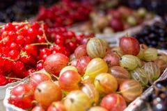 Świeży redcurrant i agresty w papierowych tacach przy rynkiem bac obraz royalty free