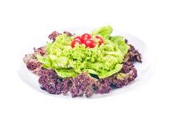 świeży sałaty talerza pomidor Zdjęcia Stock