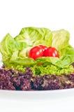 świeży sałaty talerza pomidor Zdjęcie Stock
