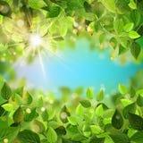 Świeży sezon rozgałęzia się z zielonymi liśćmi 10 eps ilustracji