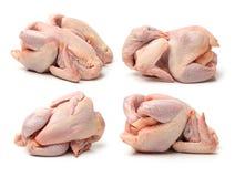 Świeży surowy kurczaka set fotografia royalty free