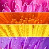 świeży sztandaru kwiat Obraz Royalty Free