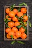 Świeży tangerine clementine z liśćmi w drewnianej tacy na ciemnym drewnianym tle obraz stock