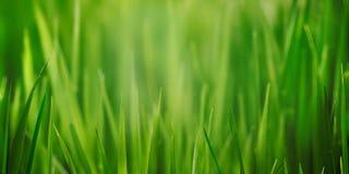 Świeży trawy pola zakończenie up z bokeh backround Fotografia Stock
