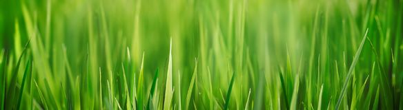 Świeży trawy pola zakończenie up z bokeh backround zdjęcie stock