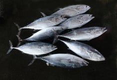Świeży tuńczyk dla sprzedaży przy rynkiem Zdjęcia Royalty Free