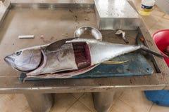 Świeży tuńczyka Fishmarket Sal Rei przylądek Verde fotografia stock