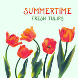 Świeży tulipan kwitnie ilustrację Obrazy Royalty Free