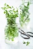 Świeży tymiankowy ziele w szkle obraz royalty free