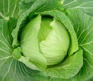 świeży vegatable Obraz Royalty Free