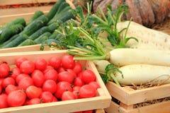 Świeży vegetale Obraz Royalty Free