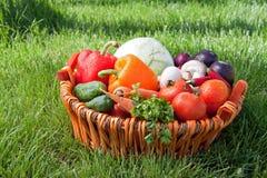 świeży warzywo zdjęcie stock