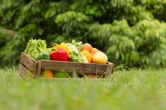 Świeży warzywo przy organicznie gospodarstwem rolnym zdjęcie stock