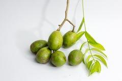 świeży wieprz śliwki dorośnięcie na drzewie, Otaheite jabłko dzwoni Fotografia Stock