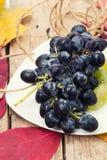 Świeży winograd Fotografia Stock