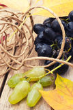 Świeży winograd Obrazy Stock