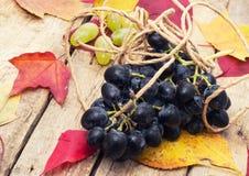 Świeży winograd Zdjęcia Royalty Free
