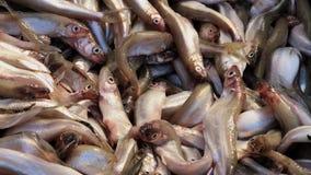 Świeży wytapia ryby dla sprzedaży zbiory wideo