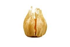Świeży złoty przylądka agrest Zdjęcie Royalty Free