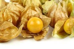 Świeży złoty przylądka agrest Fotografia Royalty Free