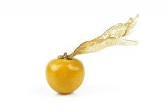 Świeży złoty przylądka agrest Obraz Royalty Free