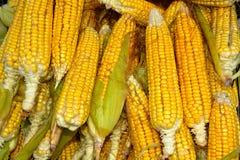 Świeży zbliżenie kukurudze robi tłu Fotografia Stock