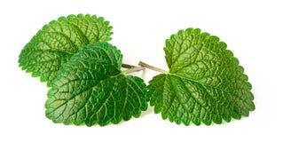 Świeży ziele, cytryna balsam odizolowywający na bielu Zdjęcie Stock