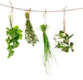 Świeży ziele wieszać zdjęcie royalty free