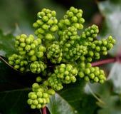 Świeży zielonej rośliny przyrost Obraz Stock